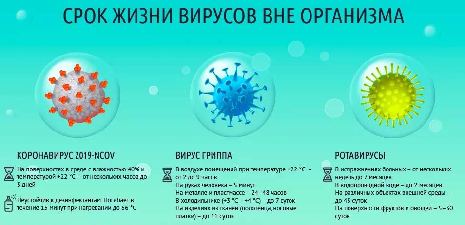 Срок жизни вирусов вне организма
